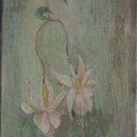 Katumuksen kukat