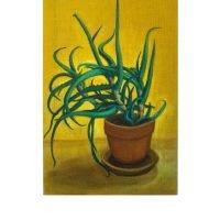 Aloe Vera on Yellow